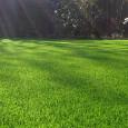 Wybór kosiarki w dużej mierze zależy od wielkości naszego trawnika