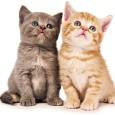 Małe kotki to urocze i pełne wdzięki stworzenia, nie da się ich nie kochać!