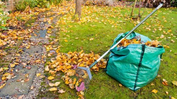 Zgrabienie liści to jeden z podstawowych obowiązków jesiennego ogrodnika, liście lądują w kompostowniku