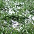 Trawnik po zimie wymaga szczególne pielęgnacji - czas ją zaplanować