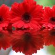 Kolor czerwony to barwa miłości, nie tylko tej namiętnej!