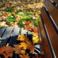 Każda pora roku ma swój urok - jesień to różnokolorowy dywan z liści...