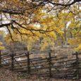 Takie drewniane ogrodzenie malowniczo komponuje się z otoczeniem, intryguje kształtem i sposobem ułożenia palików