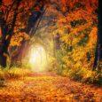 Jesień to piękna pora roku, przede wszystkim dzięki multikolorowym liściom
